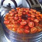 Tomatoes in dehydrator