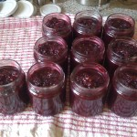 Hedgerow chutney all bottled